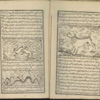 کتاب خواص حیوان